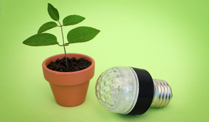Small potted plant next to a LED light bulb
